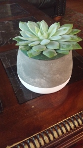 The succulent is consistently reliable in its beauty and health....great addition to any happy place1